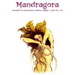 Mandragora Nr. 1